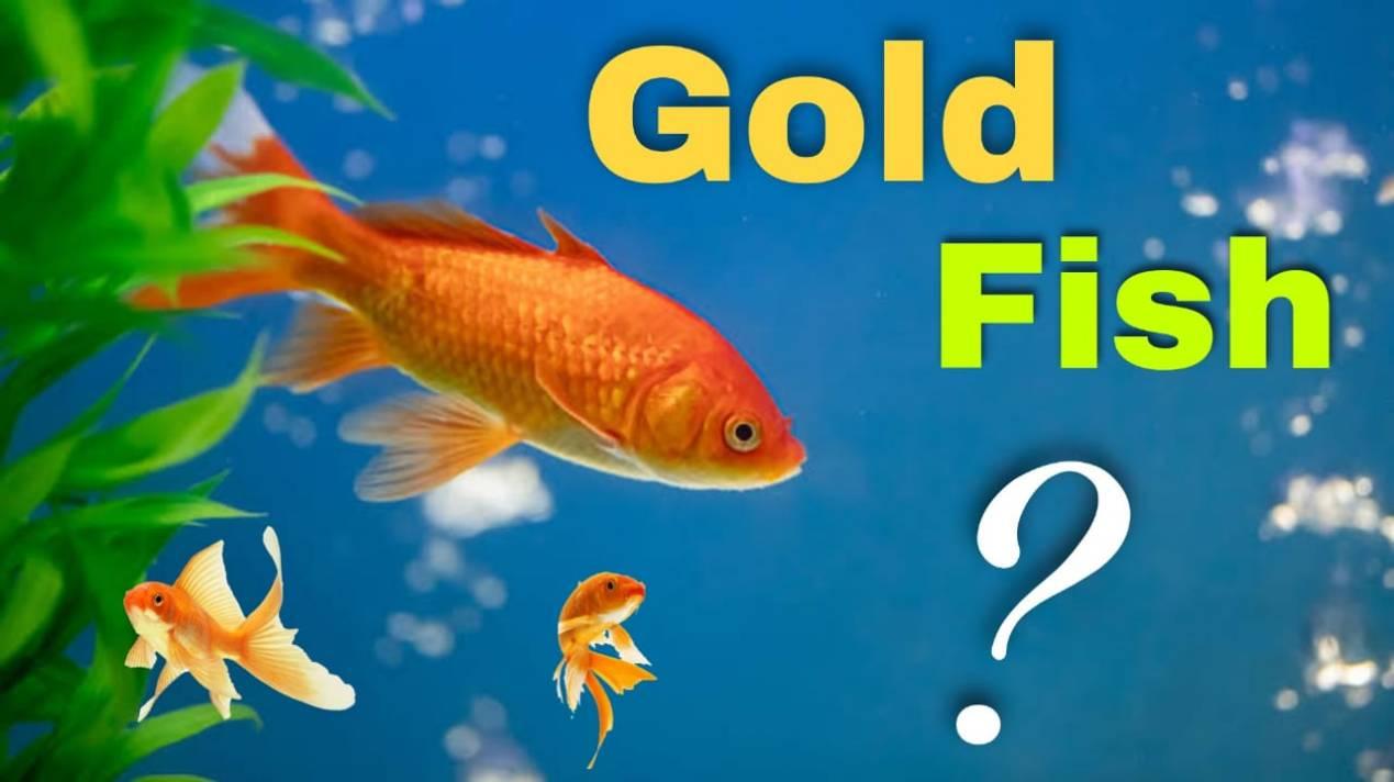 goldfish ka scientific name